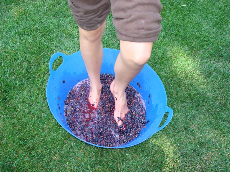 grapes - stomp 3