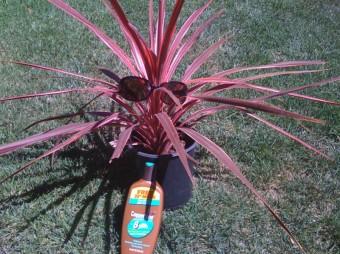 black adder sunburned