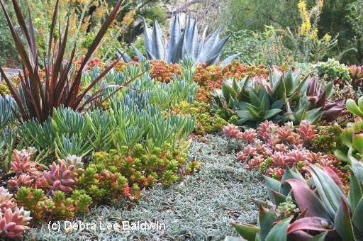 Succulent container gardens book review harmony in the for Garden design using succulents