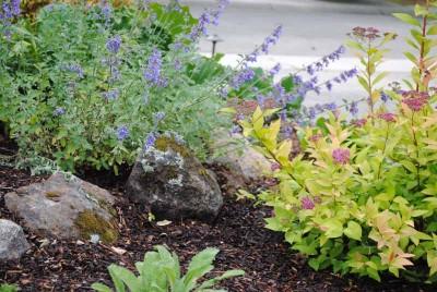 creating a no-lawn front garden