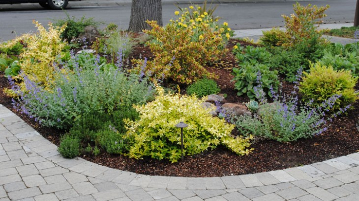 New low water high color garden harmony in the garden for Garden designs without grass