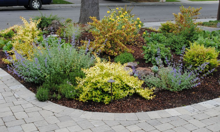 Low Water High Color Garden | Harmony in the Garden on No Grass Backyard  id=67262