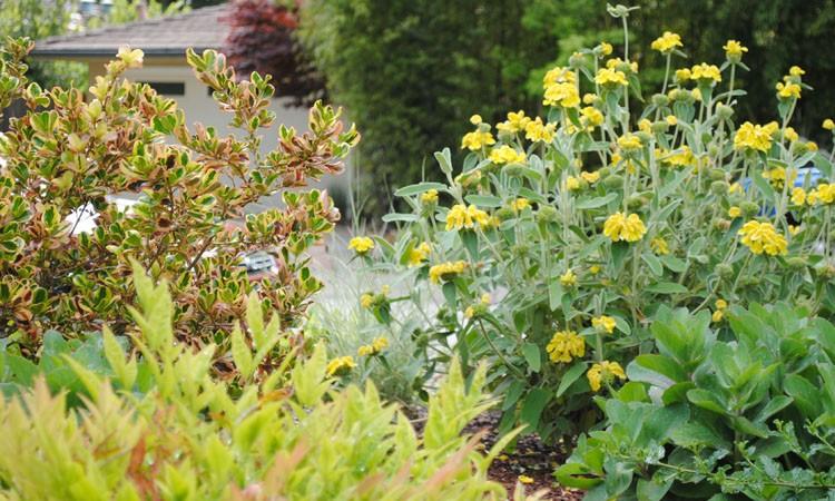 Front Yard No-Lawn Garden_0184