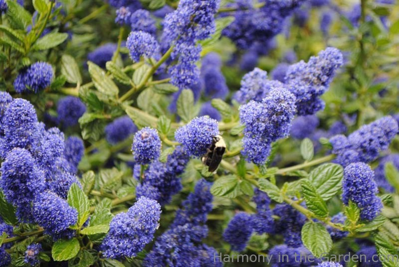 Delightful Native Plants To Oregon Part - 3: ... Source · Native Plants
