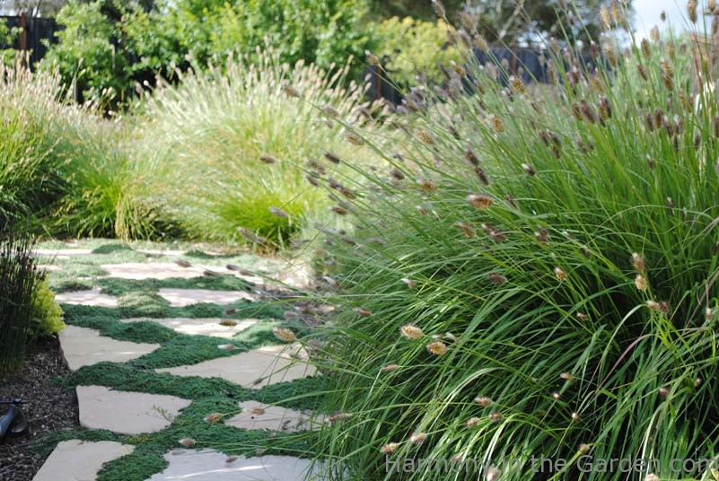 Perfect Marvelous Garden Design Using Grasses Izvipi Com