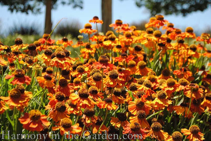 Top 15 Favorite Orange Plants