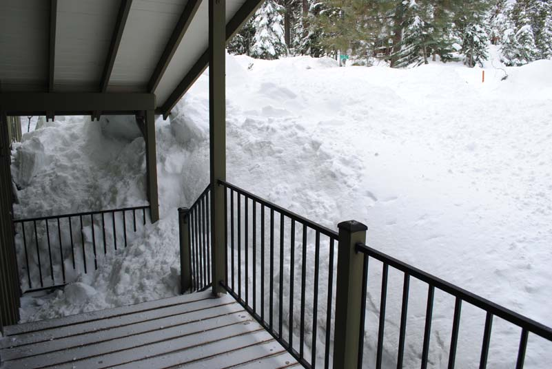 Our front garden absolutely smothered