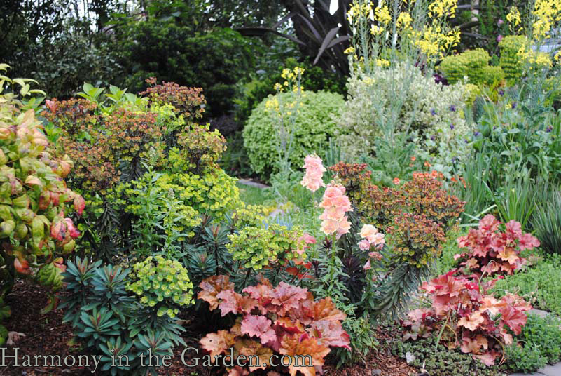 Hooray for Heucheras! An interview with Terra Nova Nurseries ...