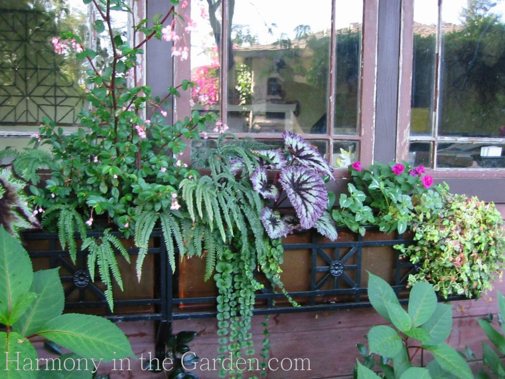 shady window box design