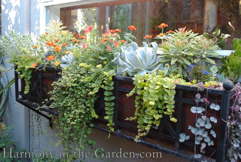 One Windowbox Four Ways Harmony In The Garden