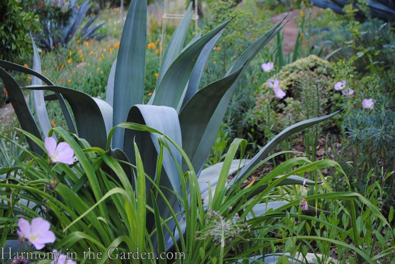 Mixing flowers and succulents harmony in the garden for Structural plants for small gardens