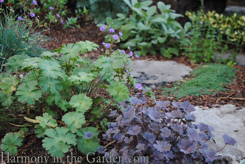 Burgundy And Silver Foliage Garden Bed