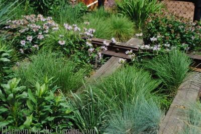 festuca amethystina 'superba' and monarda bradburiana and Schizachyrium scoparium Ilittle bluestem)