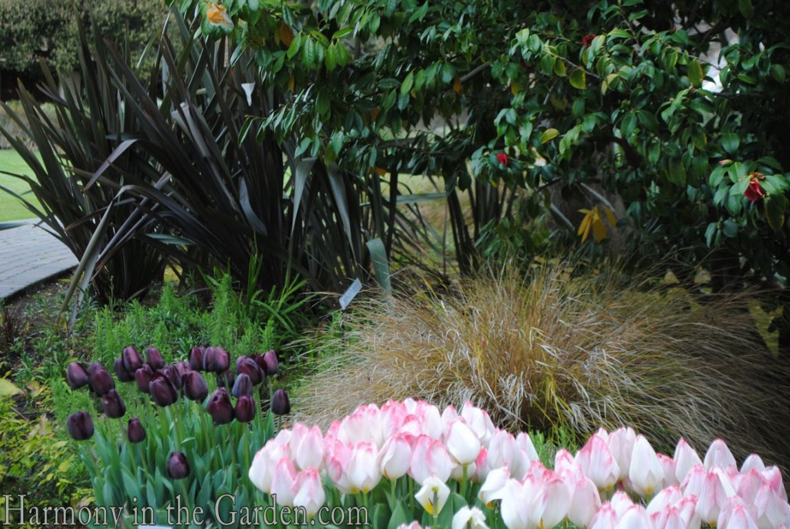 Sunset Garden's Flaming Persimmon and Cafe Noir Tulips
