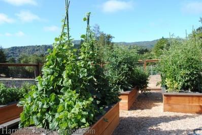 Redwood veg boxes