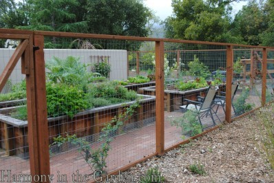 fenced in veg bed