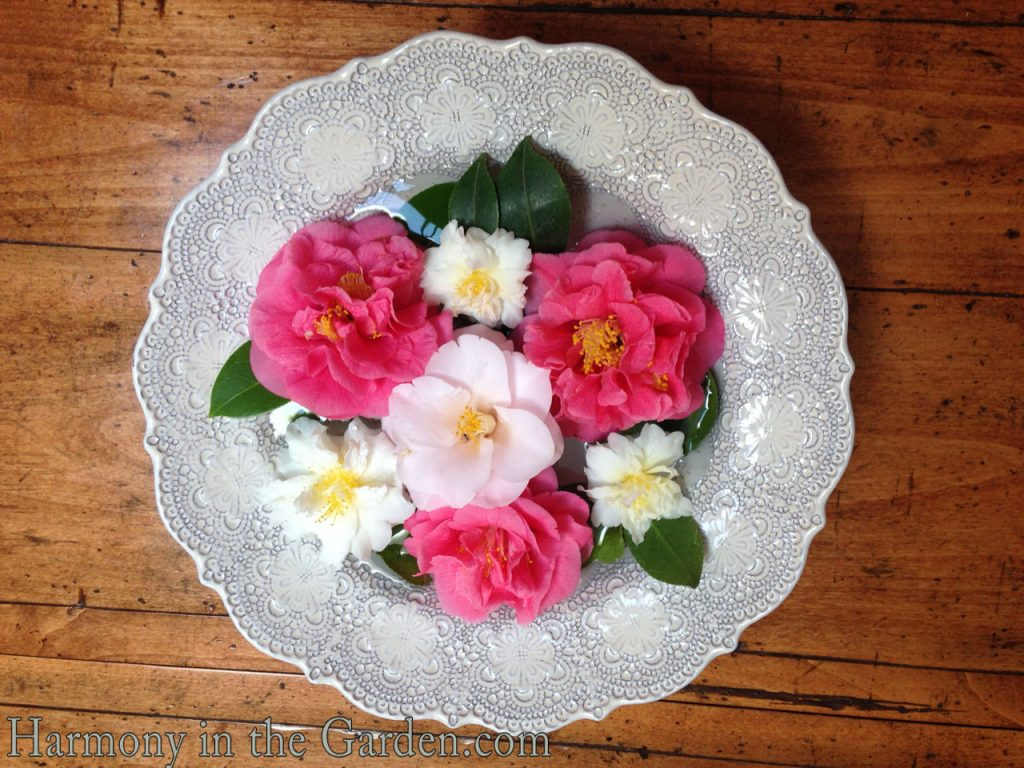 Blooms in a bowl
