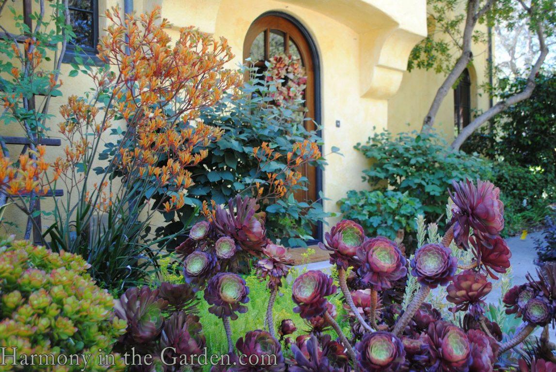 Coutre garden