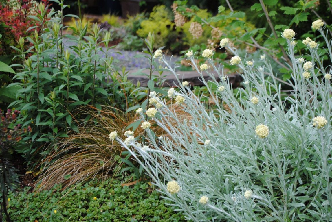 Curry Landscape And Garden : Rebecca s front garden harmony in the