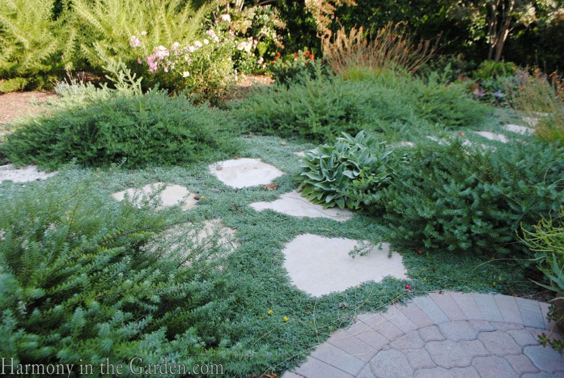 Mediterranean Garden Makeover-Northern California-Dymondia-Drought Tolerant Garden Design-Lawn Removal Ideas