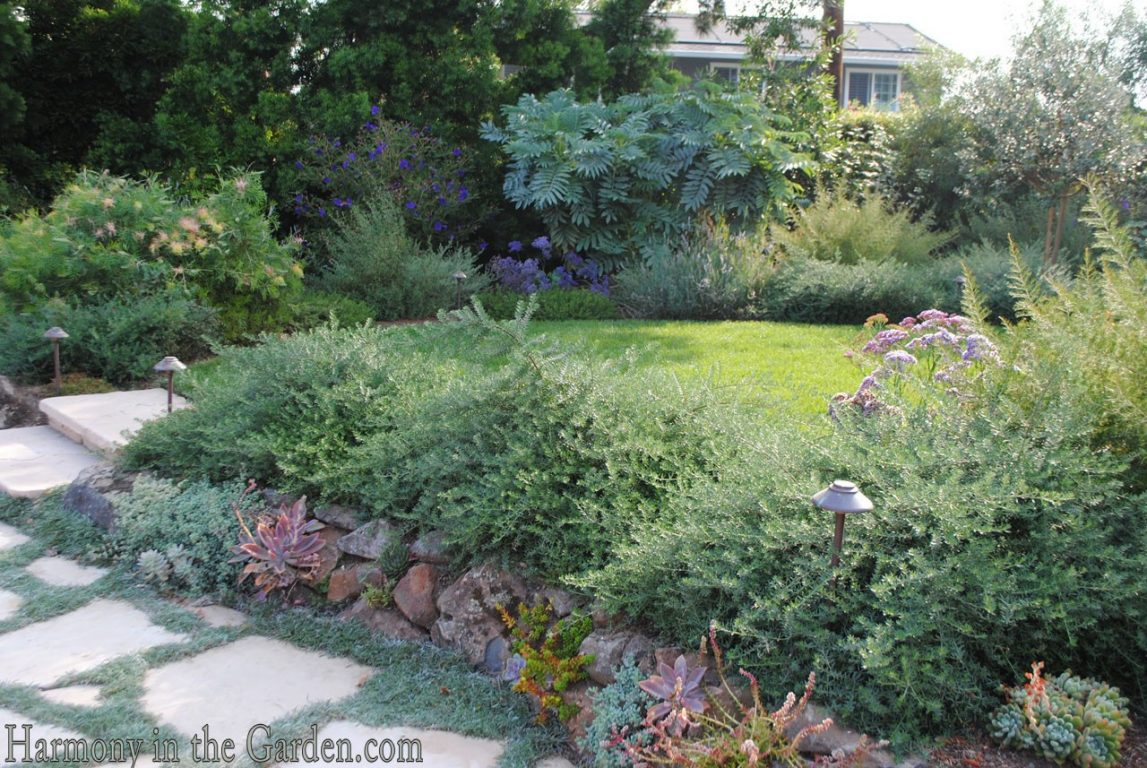 Mediterranean Garden Makeover-Northern California-Drought Tolerant Garden Design-Lawn Removal Ideas-succulent wall