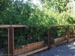 garden makeover-removing pools-northern california-vegetable bed-garden fence--pea gravel