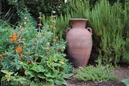 Mediterranean Garden Makeover-Northern California-Drought Tolerant Garden Design-Lawn Removal Ideas-garden urn