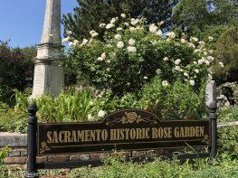 sacramento historic rose garden-perennials-native garden-northern california-pioneer history