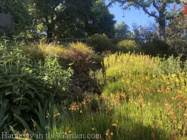 bulbine-phlomis-Tiers-Slopes-Northern California Gardens