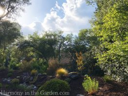 awkward space transformations-northern california-garden design