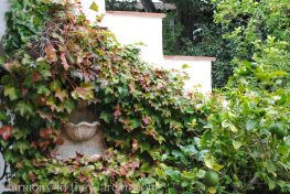 awkward space transformations-northern california-garden design-boston ivy on wall
