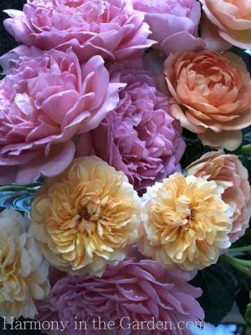 Planting & Pruning Roses