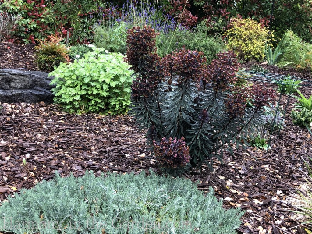 rain-garden-pollinator-plants-early-spring