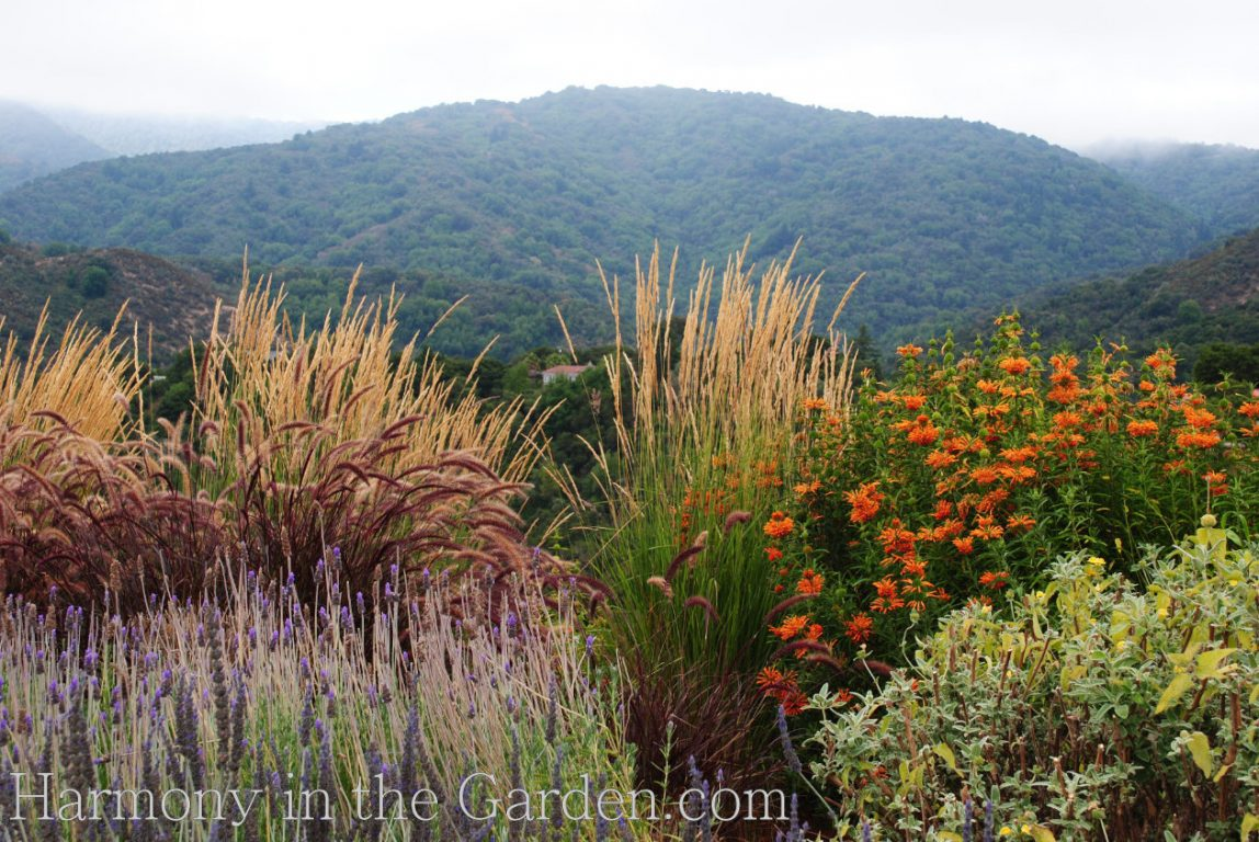 'Dentata' lavender deer resistant garden