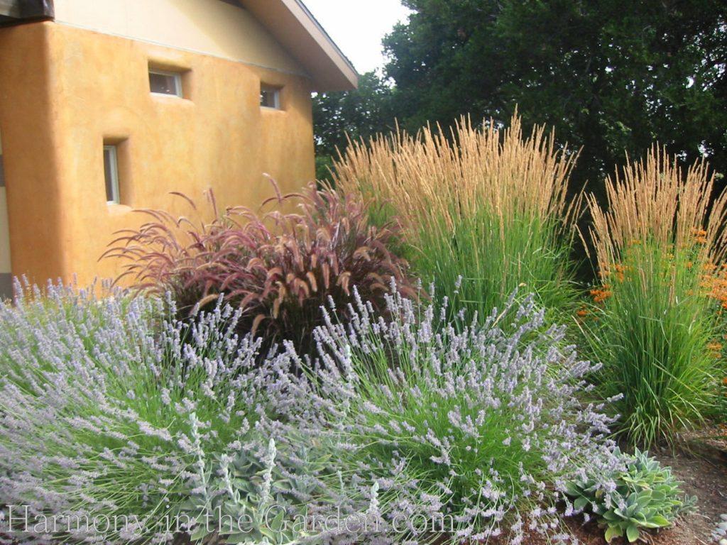 lavender 'provence' deer resistant