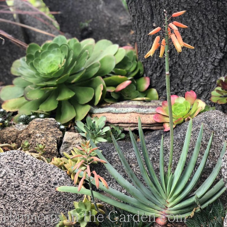Gardening Under Oaks