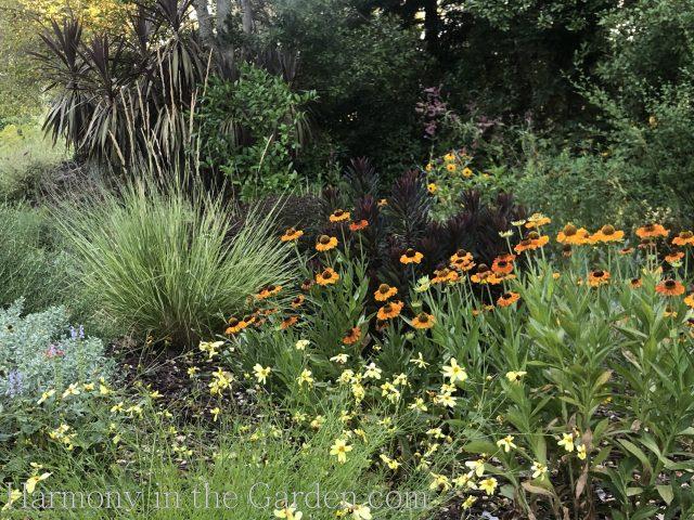 Perennials Summer Heat