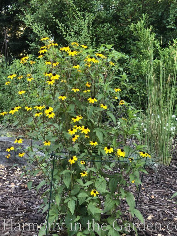 Top Ten Summer Perennials for hot sun