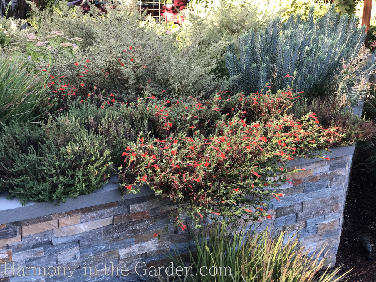 sloping front garden
