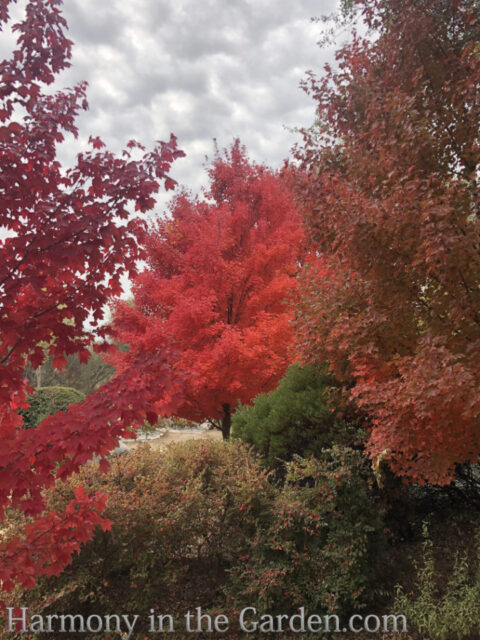 Surprising Sources of Fall Color