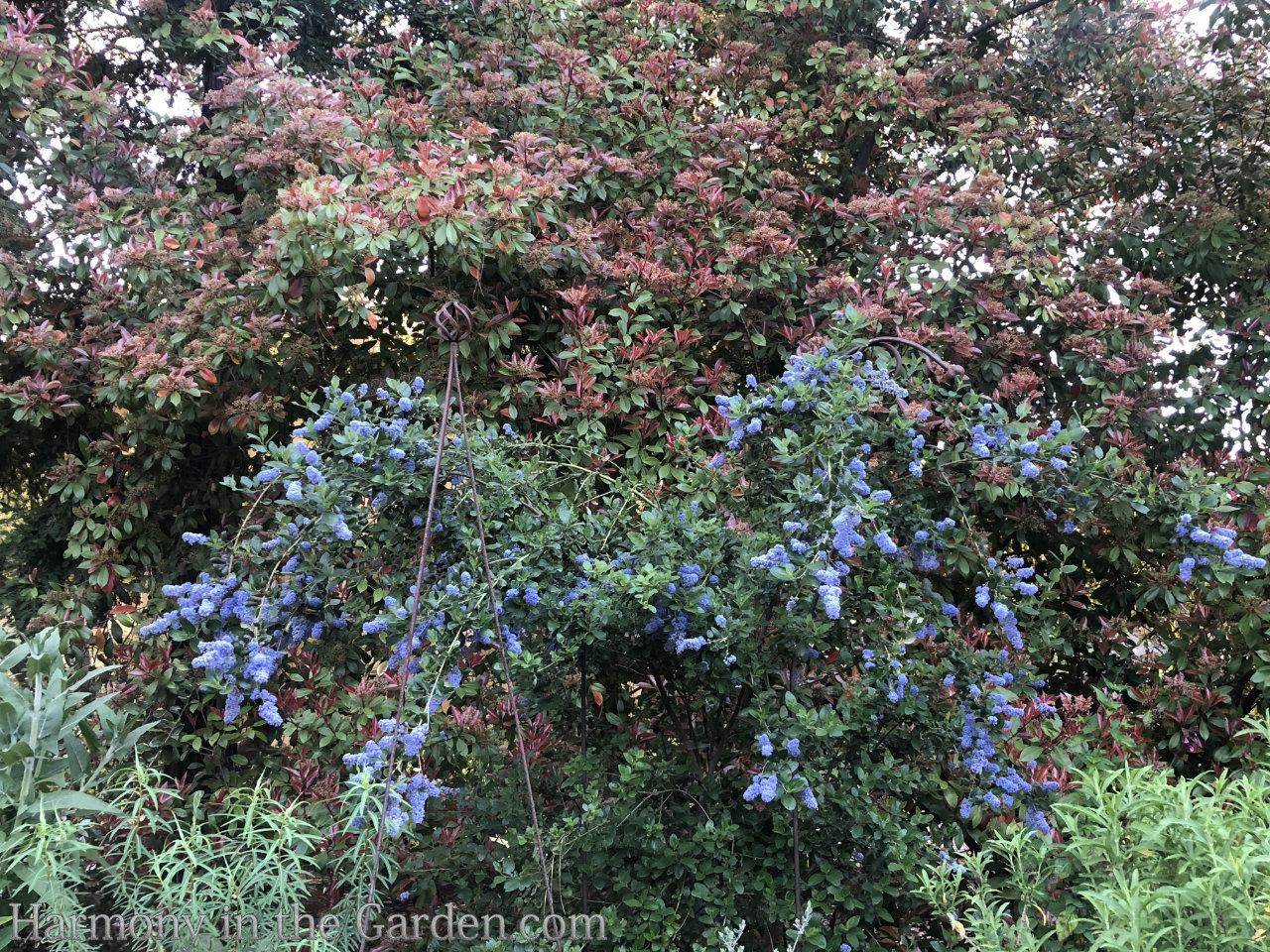 https://harmonyinthegarden.com/sacramento-historic-cemeterys-rose-native-perennial-gardens/