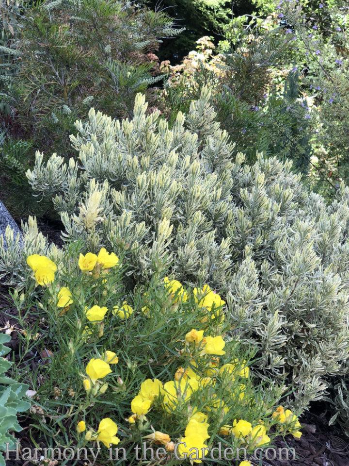Top 30 Native Plants