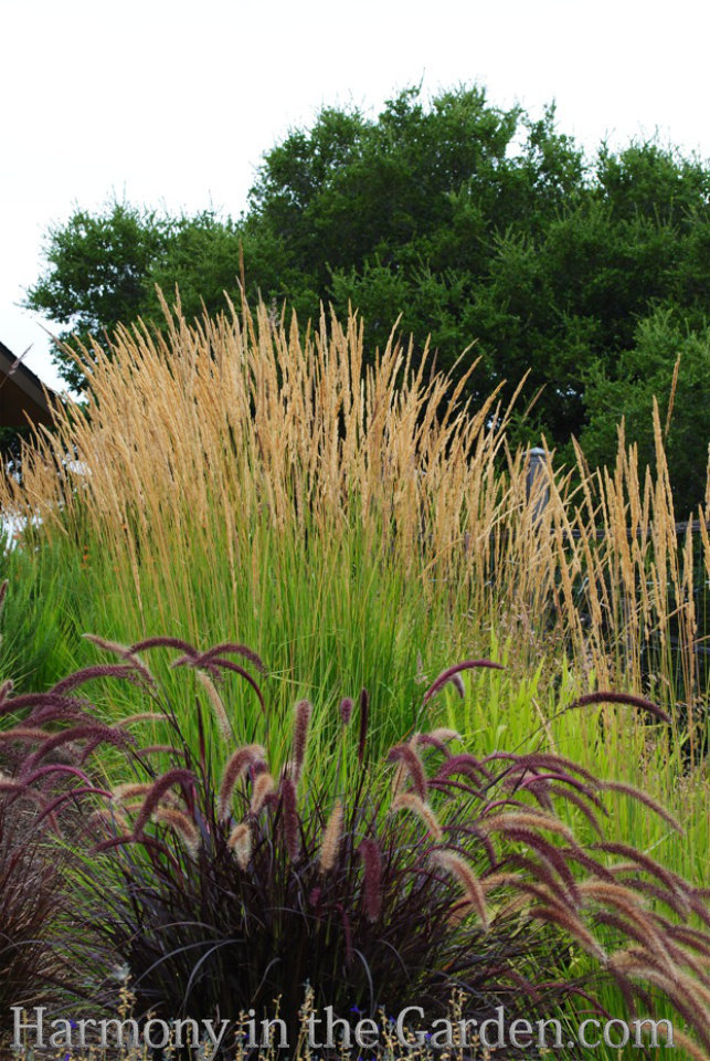 Adding height with flowering, towering plants
