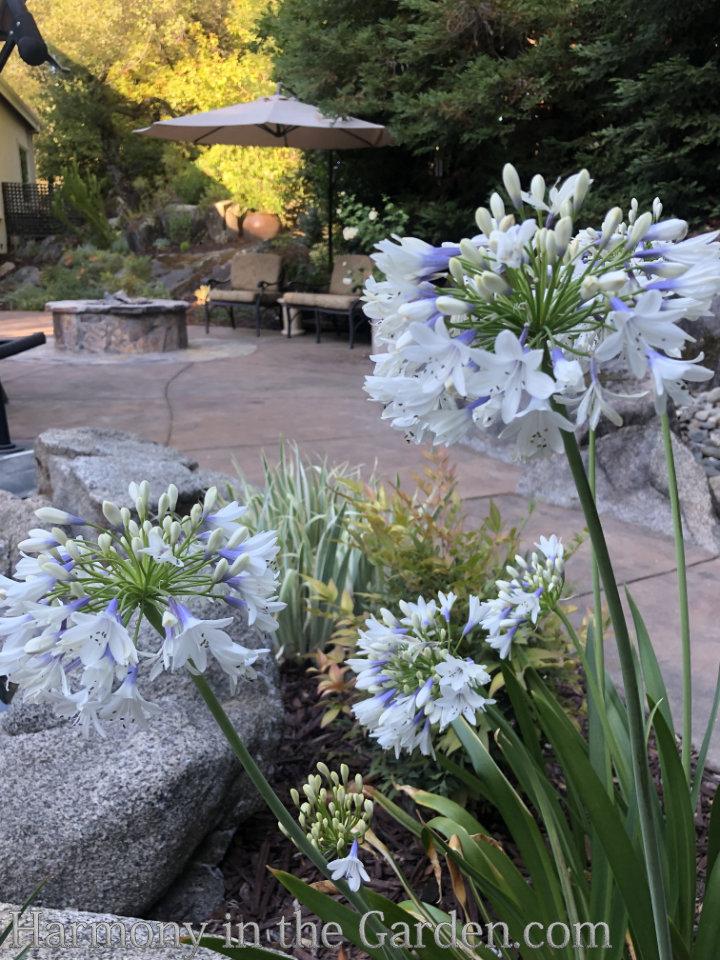 Heat-Loving Perennials