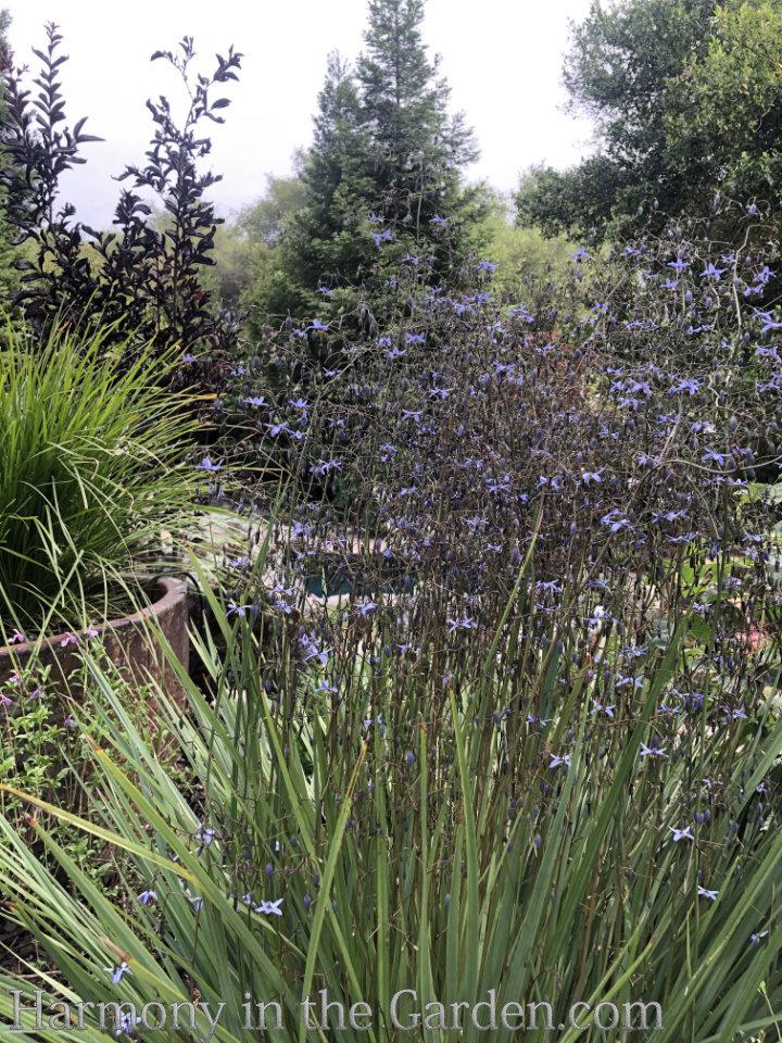 Heat Loving Perennials