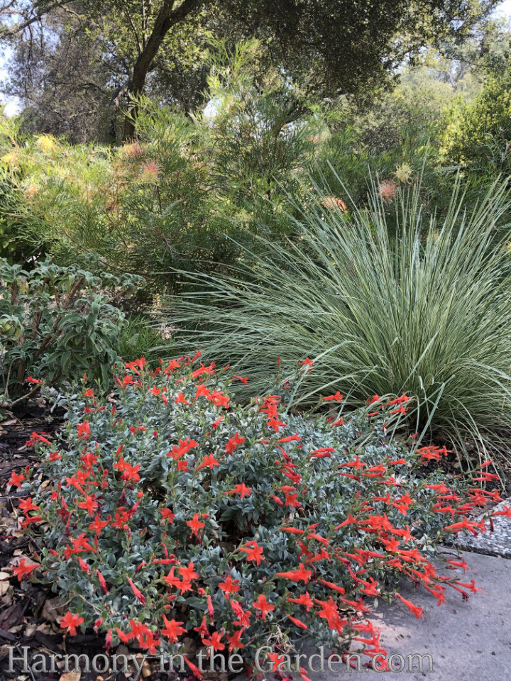 Late Summer Sizzle in the Garden