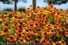 Top 10 Favorite Orange Plants