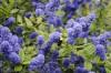 Drought tolerant superstars for the spring garden