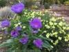 Drought Tolerant Superstars for the summer garden