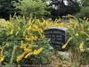 The Sacramento Historic Cemetery's Native, Perennial, & Rose Gardens